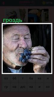 мужчина поднес к носу гроздь винограда и нюхает её