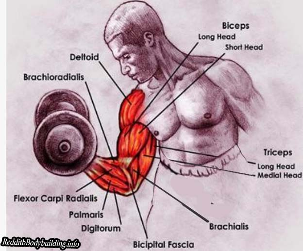 Best Way to Achieve Muscle Mass for Men