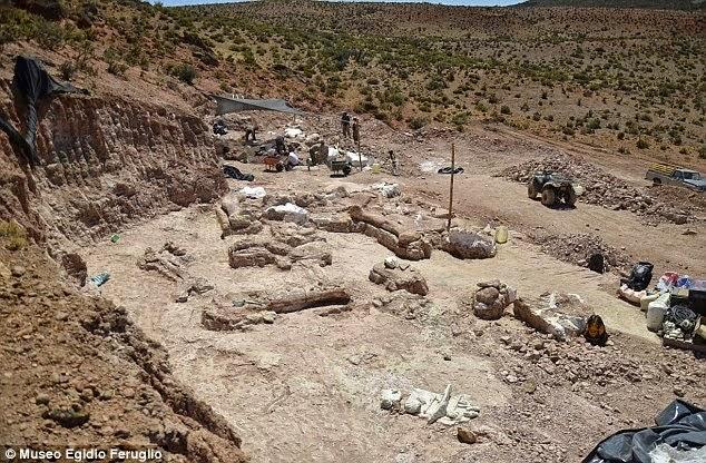 Inilah Fosil Dinasour Paling Besar Pernah Ditemui
