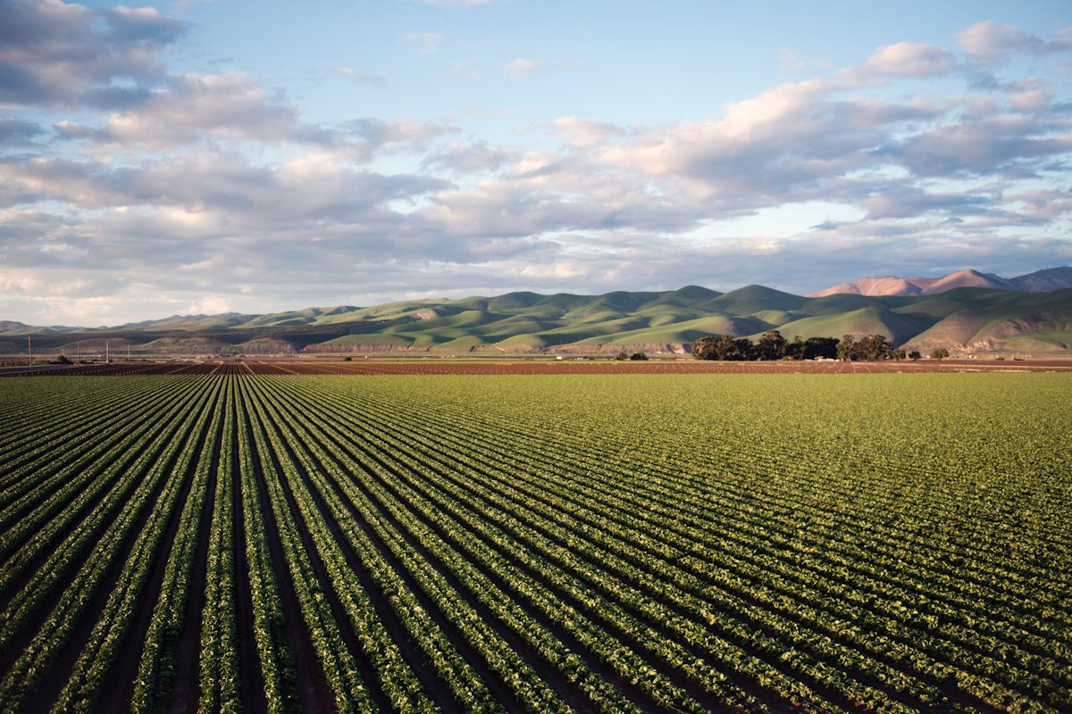 peluang-usaha-pertanian-menjanjikan