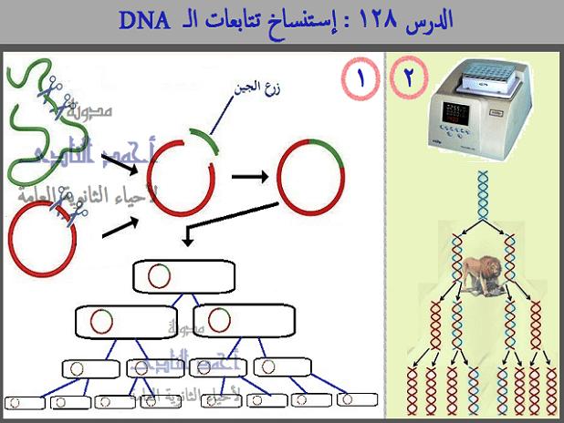 إستنساخ تتابعات dna -  عملية الإستنساخ – الحصول على قطع dna – إنزيمات القطع – القصر البكتيرية – إنزيم النسخ العكسى  أحياء الثالث الثانوى