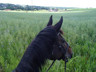 konie, jazda konna, czerwcowe łaki