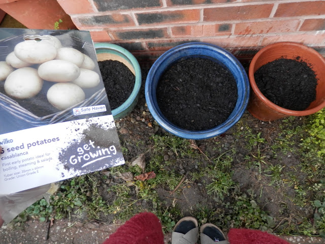 Garden March 2016. Planting peppers, potatoes and a new greenhouse. secondhandsusie.blogspot.com #garden #gardening #ukgardenblogger