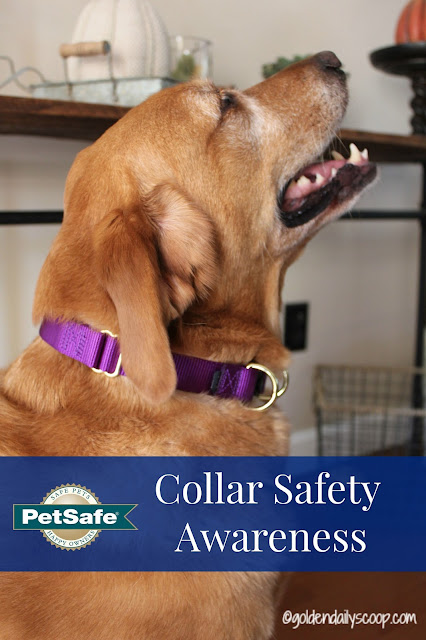 PetSafe KeepSafe Break-away collar for dog collar safety awareness