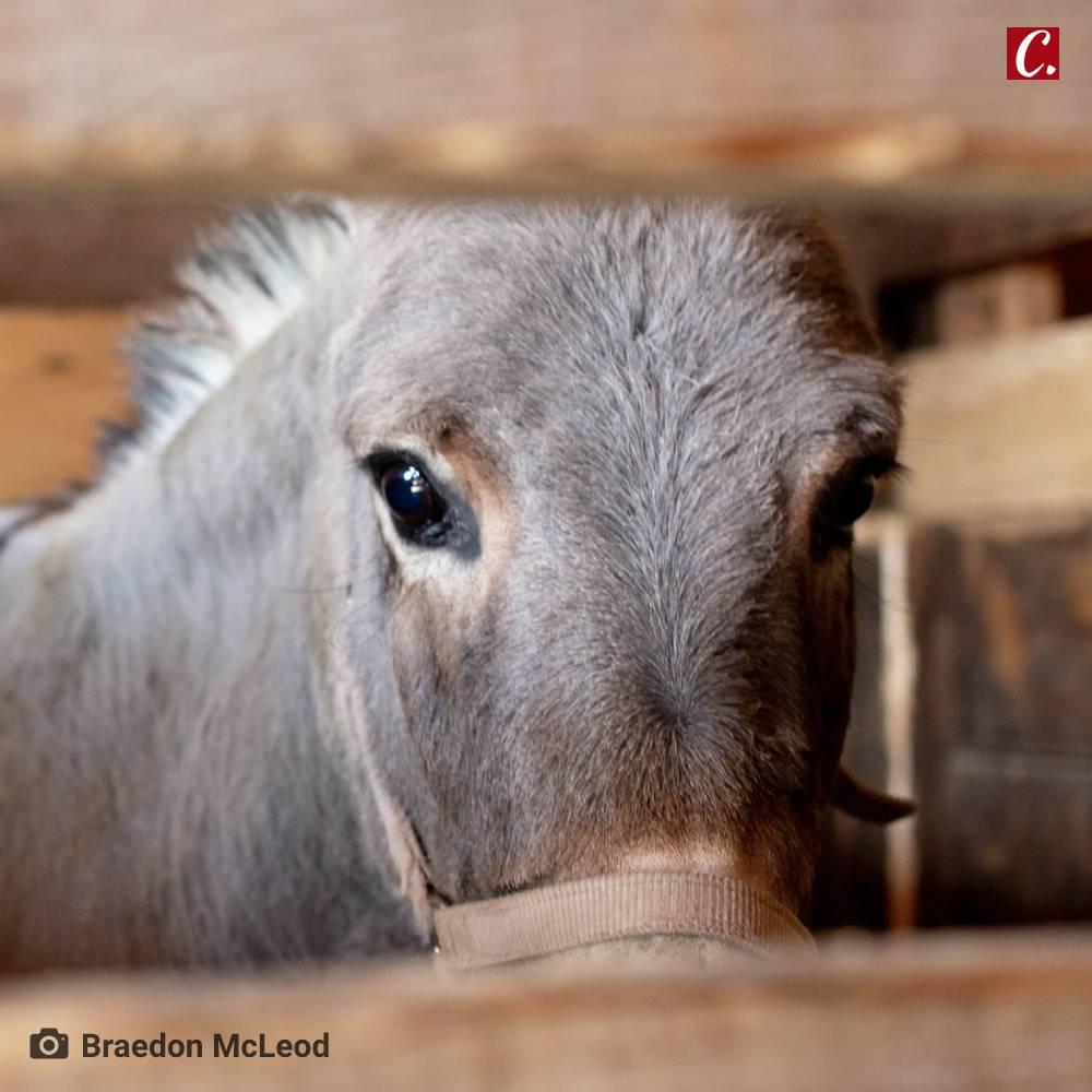 ambiente de leitura carlos romero jose mario espinola amor aos bichos amor aos animais evolucao dos bichos animais domesticos