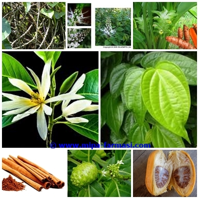 Tanaman Obat dan penggunaan tanaman obat