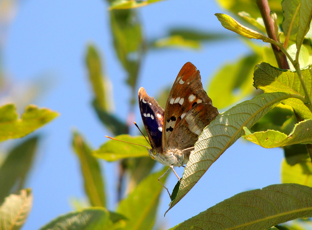 Mariposas en Pontevedra