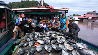 cara mancing ikan GT besar dilaut