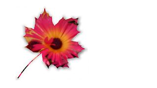 Exemplo aplicação de moldura parra sobre foto