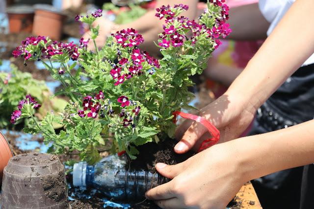 Organska bašta, presađivanje cveća