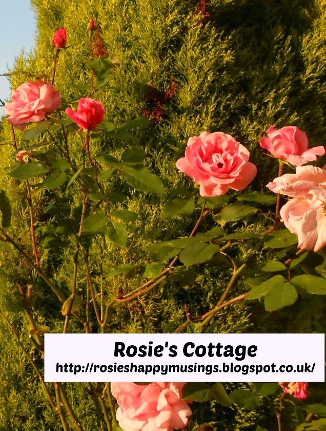 Rosie's rose garden