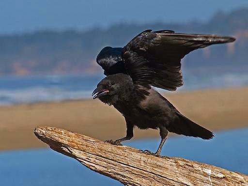 grito mp3 corvo colocar celular
