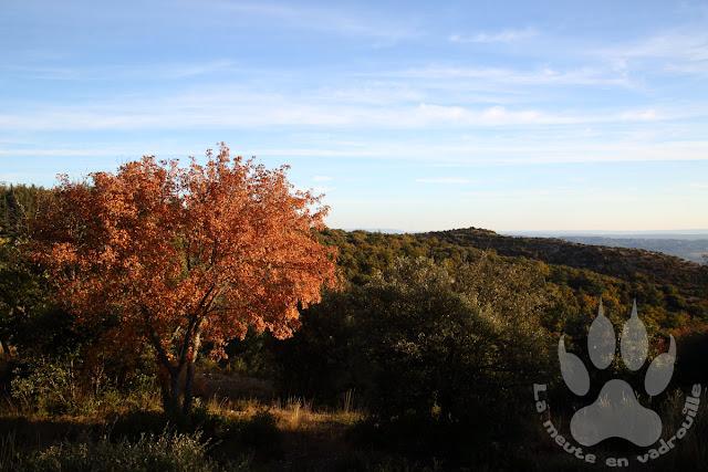 Luberon-foret-cedres-Bonnieux-bois-Roustan-automne