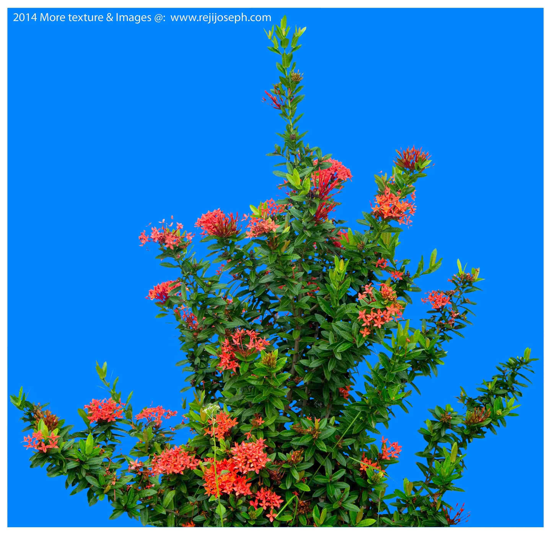 Flower Plant 00004