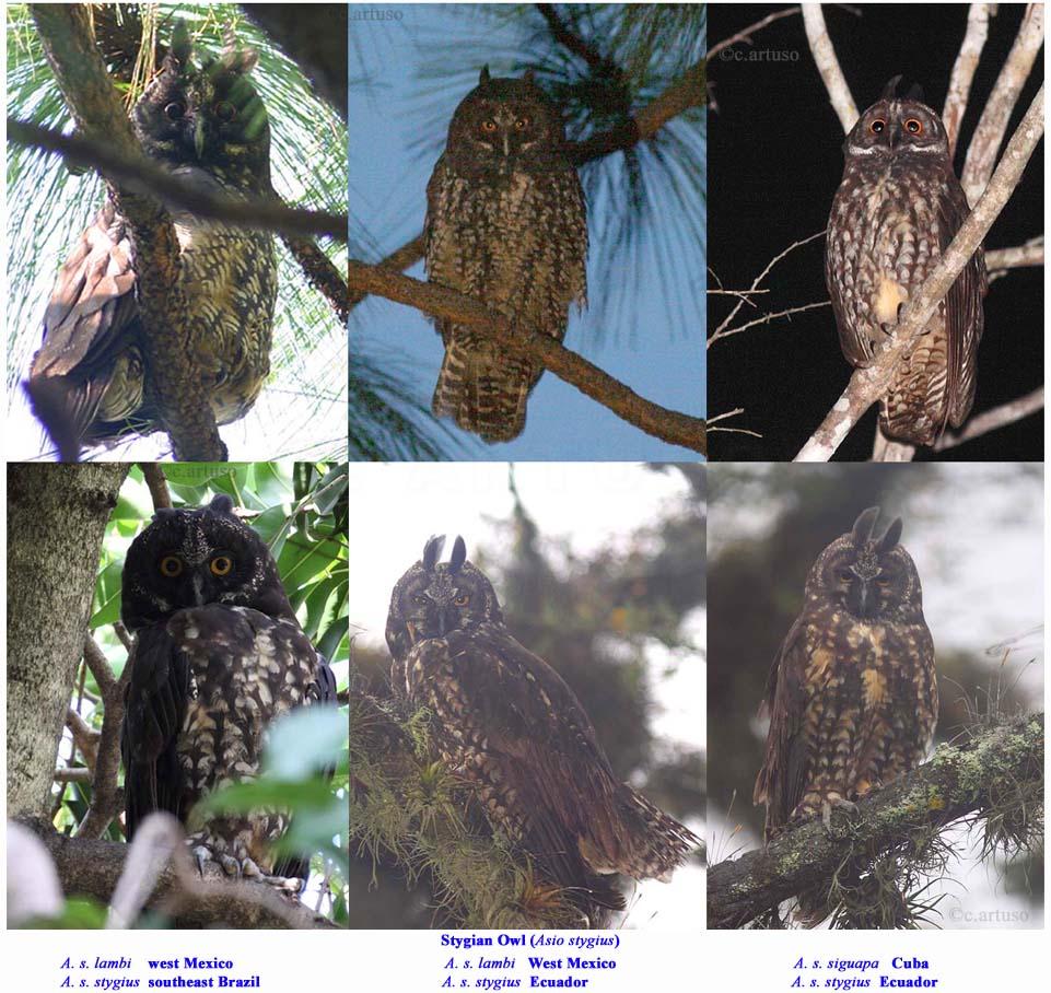 Christian Artuso: Birds, Wildlife: The many faces of the ... - photo#14