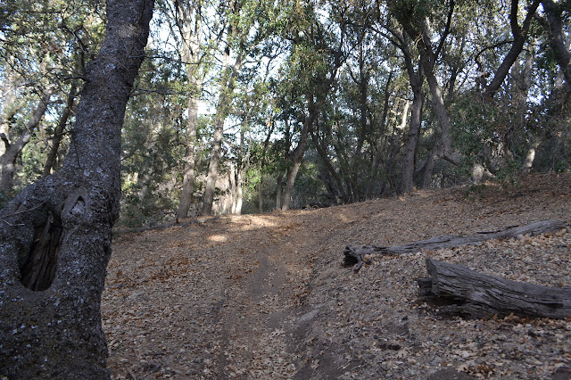 track under oaks