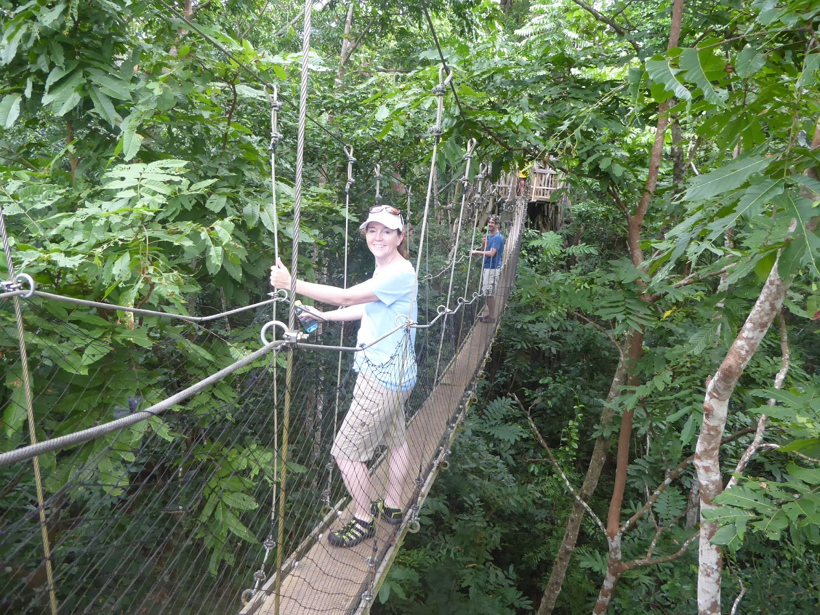 Now this is a serious Swiss Family Robison tree and possible tree house. The view of the rainforest canopy is magnificent! : canopy walkway samoa - memphite.com
