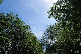 Ein Blick durch Baumkronen in den blauen Himmel