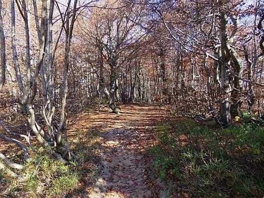 Karłowaty las.