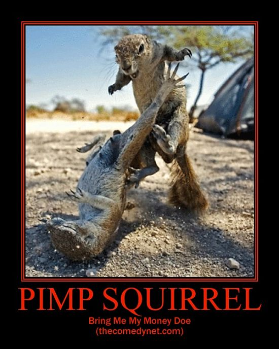Funny picture clip best demot demotivational pictures - Animal pak motivational quotes ...
