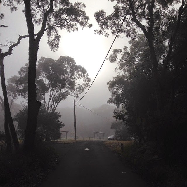 Foggy Mornings at Oatley Park