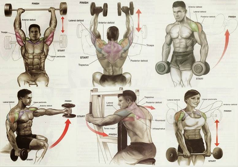 gym workout chart - Bodydulding