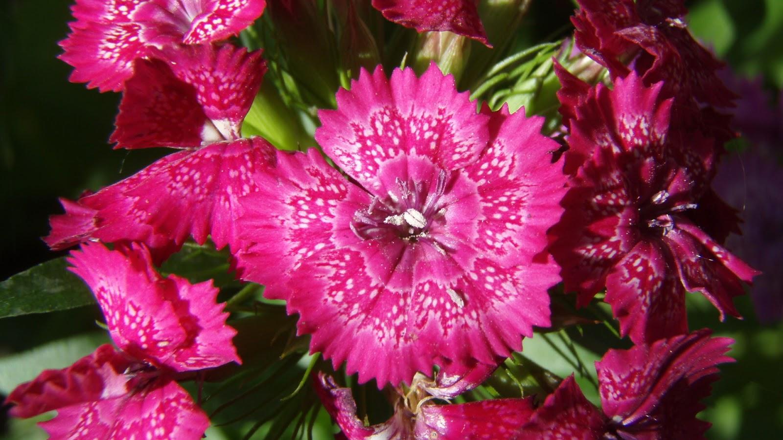 Beautiful Flowers Full HD 1080p