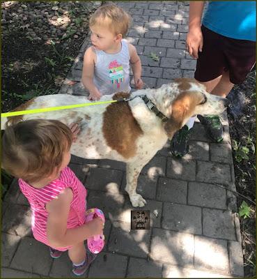 Kid Friendly Gentle Spirit Dog Valentino