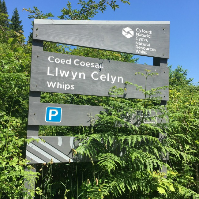 Llwyn-Celyn-whips-an-easy-walk-with-a-view-image-of-sign-post