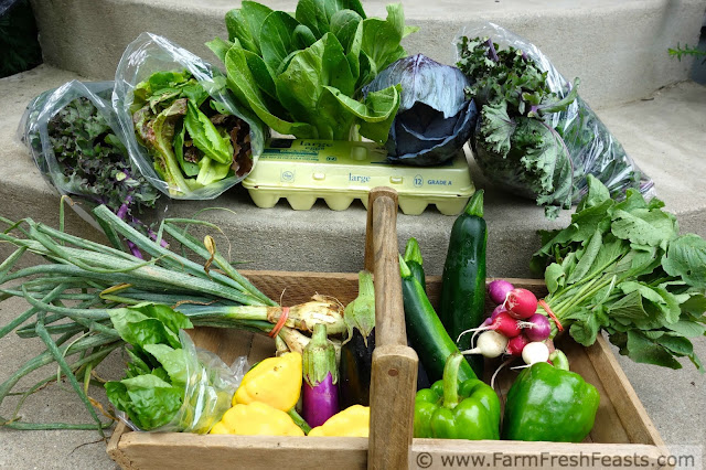 a typical early summer farm share box in the midwest
