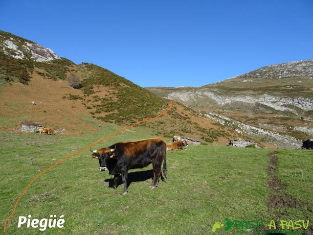 Majada Piegüé: vacas y cabañas