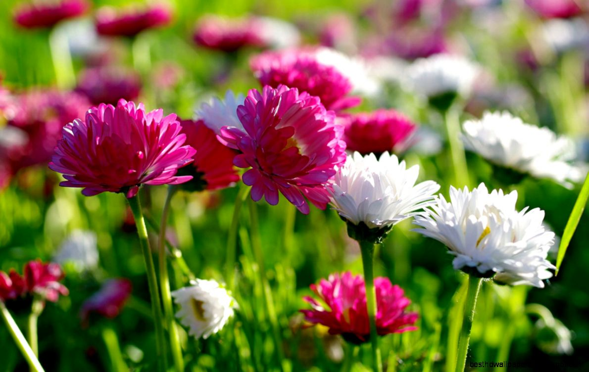 High Resolution Flower Wallpaper: Flowers High Definition Wallpaper