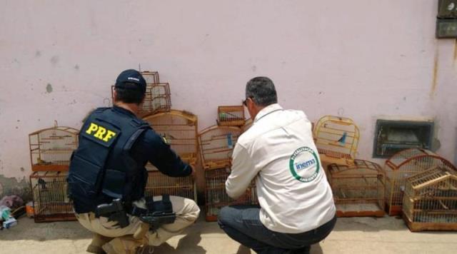 PRF em Conquista apreende animais silvestres criados em cativeiros clandestinos