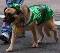 Dogs dress up for St. Patrick's Day