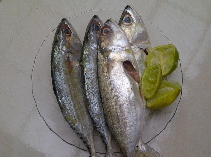 Gambar Ikan Laut Kembung