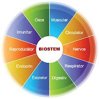 Magazin Biostem