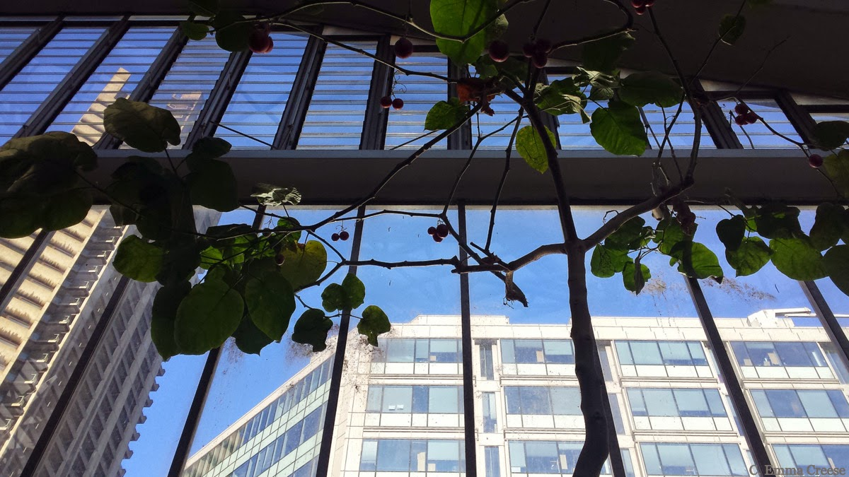 The Barbican Conservatory - Adventures of a London Kiwi