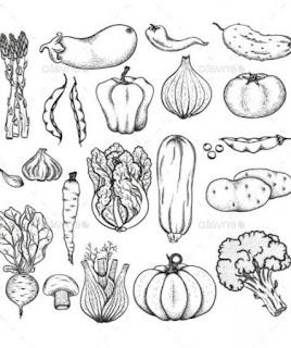 Sketsa Sayuran dan Cara Membuat Sketsa Untuk Pemula