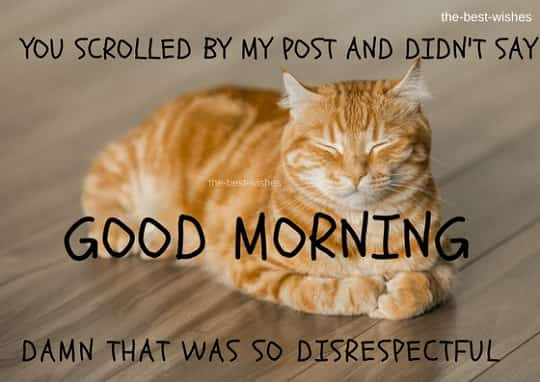very cute cat meme in good morning wishes for him