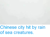 https://sciencythoughts.blogspot.com/2018/06/chinese-city-hit-by-rain-of-sea.html