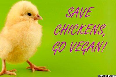 SAVE CHICKS. GO VEG (no carne, no uova che gettano via i pulcini maschi e no latte)