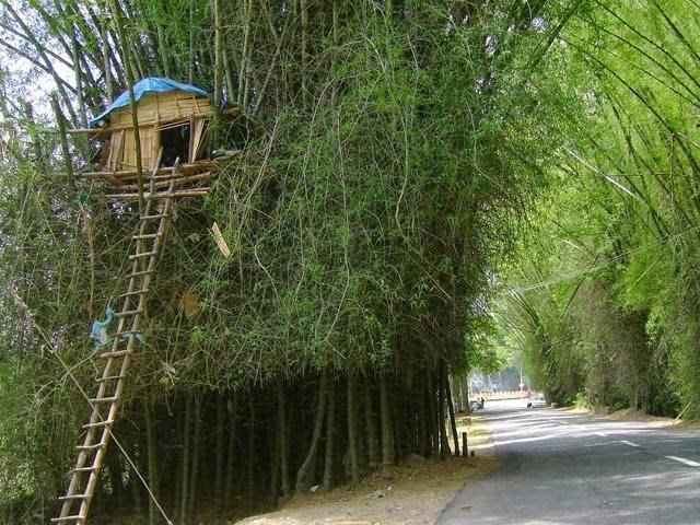 [Image: Tourist%2BAttractions%2BWayanad%2BKerala...Kerala.jpg]