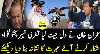 Qatar prince hunting hubara