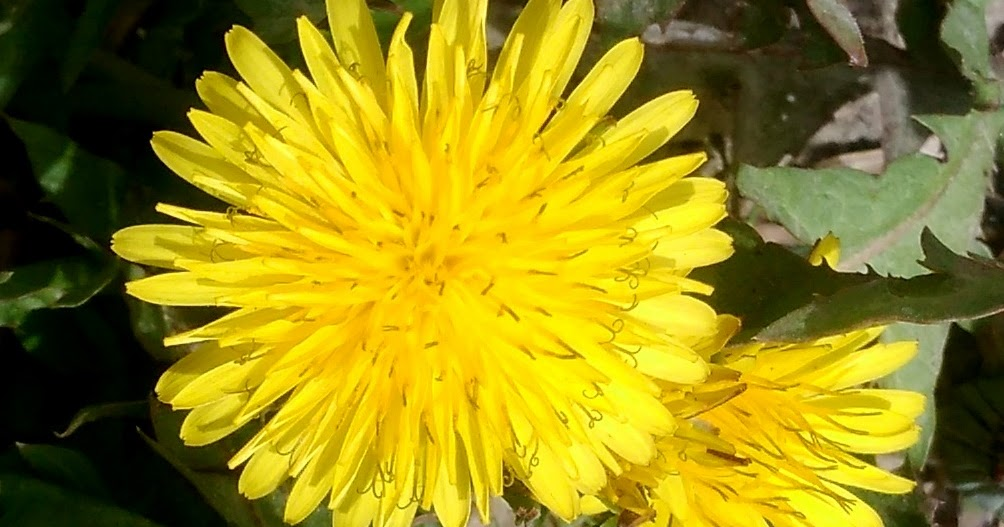 Digital world pages archive yellow spring flower name mightylinksfo Image collections