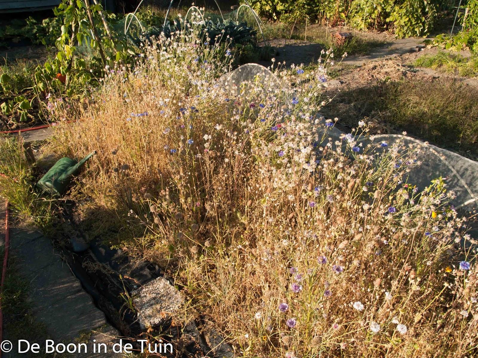 bijen border planten bloemen nectar bestuiving