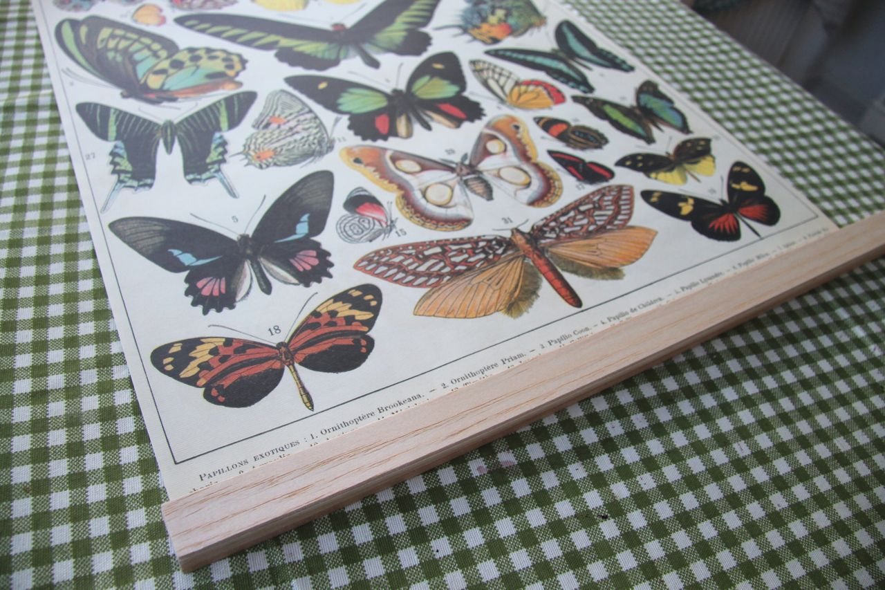 butterfly frame DIY