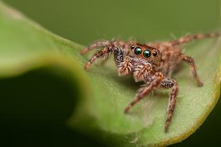 Szimbólumok/Állatszimbólumok: Pókok
