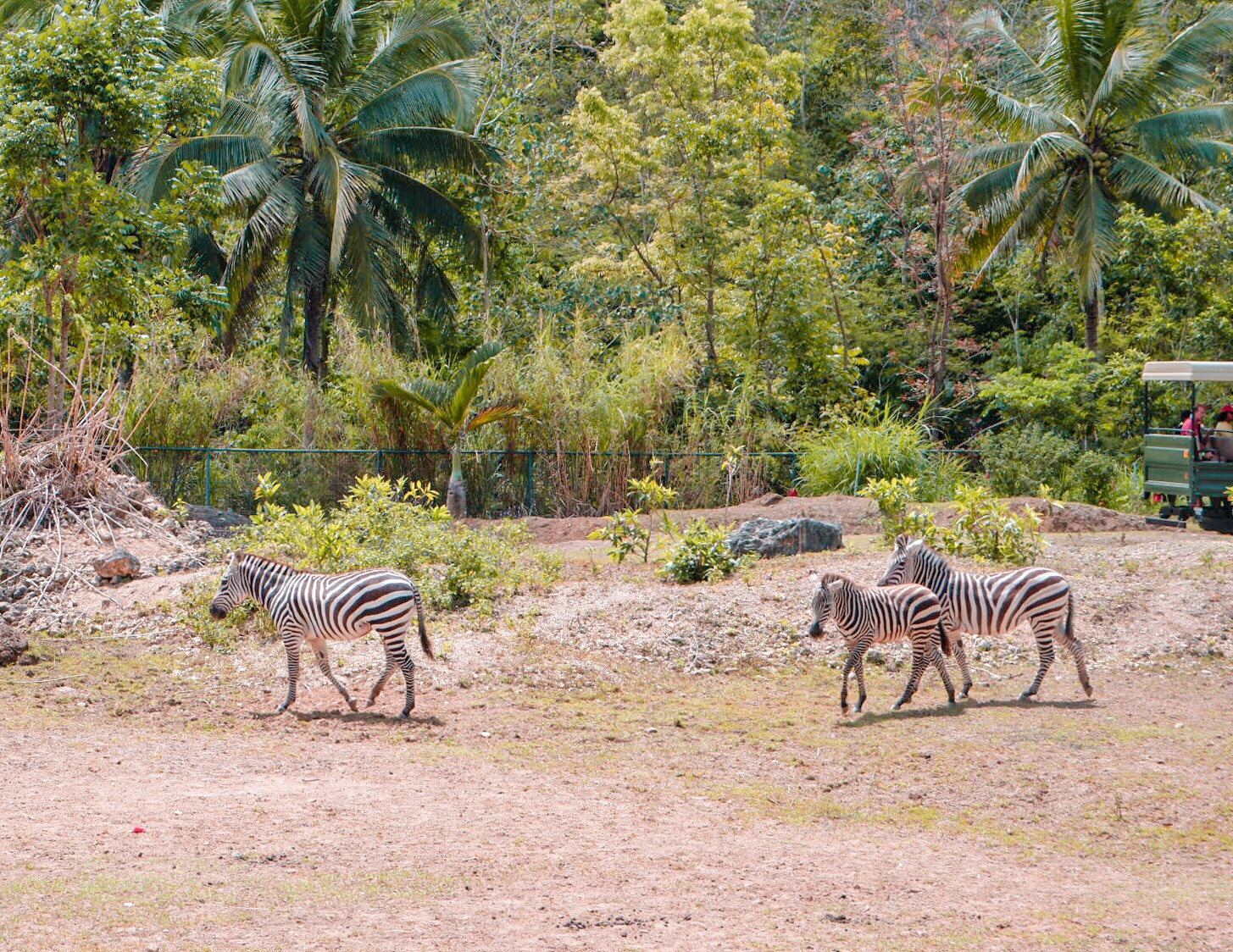 Cebu Safari and Adventure Park + Zayn's First Zoo Experience