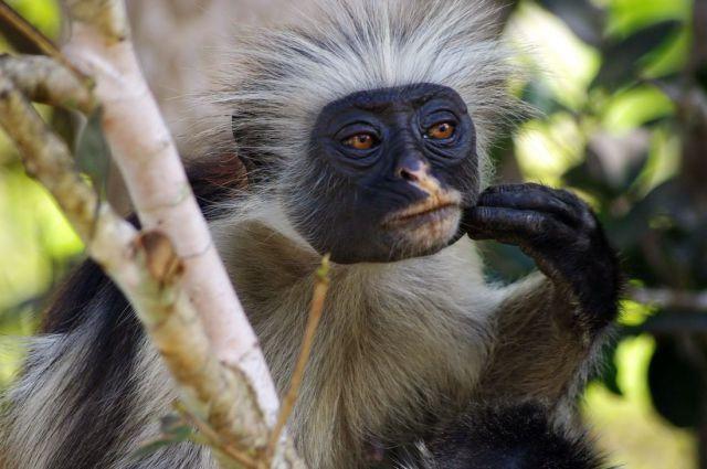 animales graciosos mico chango monp