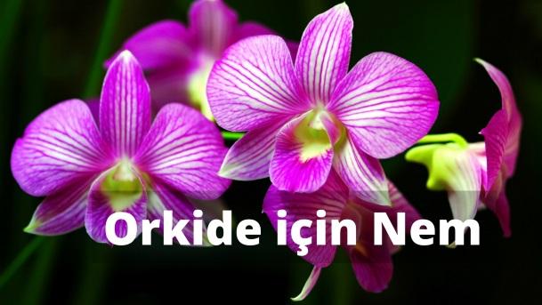 Orkide Bakımında Nemin Önemi